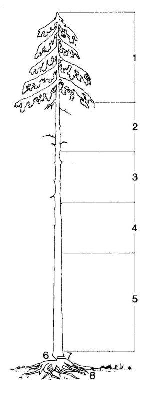 Породы свойства и характеристики древесины как строительного  Породы свойства и характеристики древесины как строительного материала